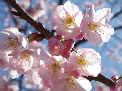 春の花を駆け足で♪_f0158364_12231319.jpg