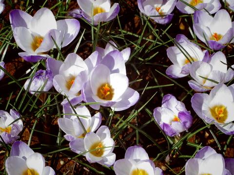 春の花を駆け足で♪_f0158364_12234437.jpg