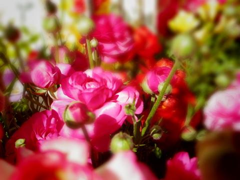 春の花を駆け足で♪_f0158364_12241661.jpg