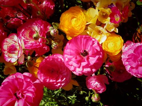 春の花を駆け足で♪_f0158364_12243494.jpg