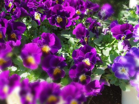 春の花を駆け足で♪_f0158364_1225153.jpg