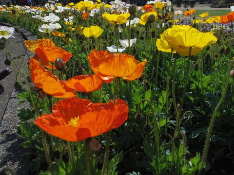 春の花を駆け足で♪_f0158364_12253382.jpg
