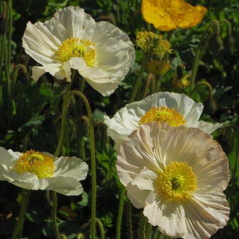 春の花を駆け足で♪_f0158364_12254681.jpg