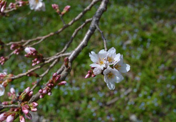 Spring has come ・・・_b0102572_1683054.jpg