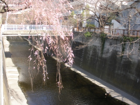 東京に行きました_d0173687_182948100.jpg
