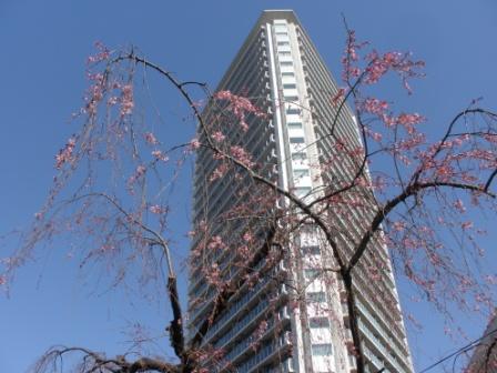東京に行きました_d0173687_18295145.jpg