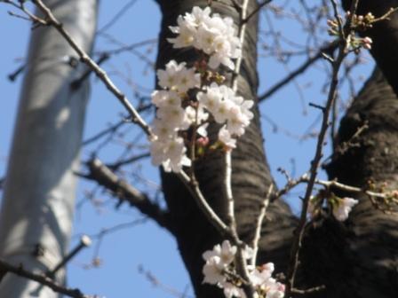 東京に行きました_d0173687_183026100.jpg