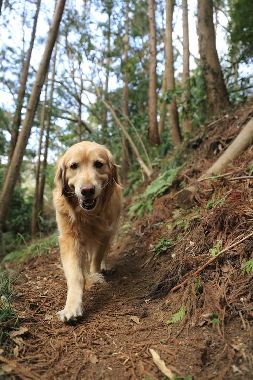 山道をお散歩_b0275998_213410.jpg