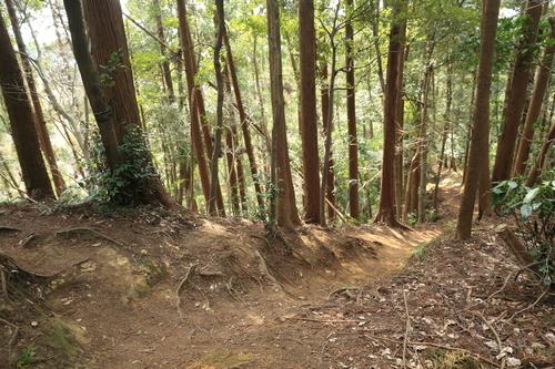 山道をお散歩_b0275998_23661.jpg