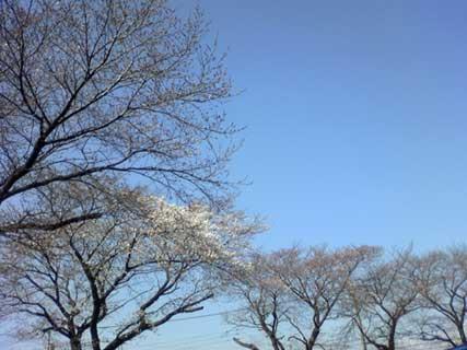 桜_d0020309_928490.jpg