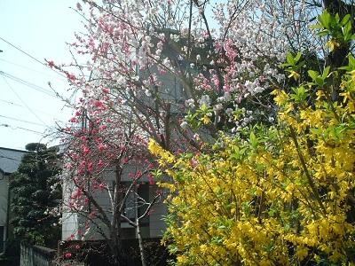 小さな旅 ~春のうららの~ ♪_b0228113_1155992.jpg