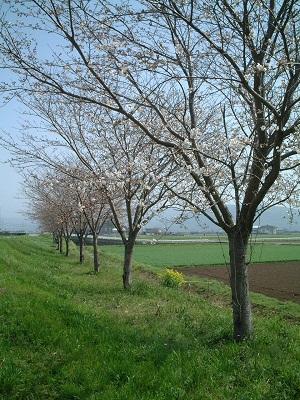 小さな旅 ~春のうららの~ ♪_b0228113_11581390.jpg