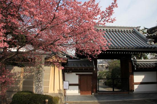 長徳寺のおかめ桜_e0048413_16174154.jpg