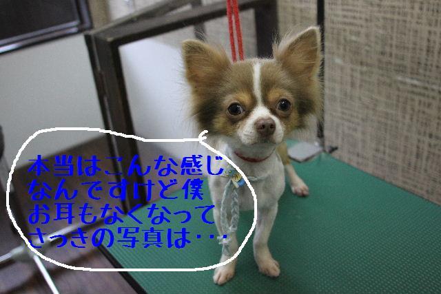 b0130018_23534113.jpg