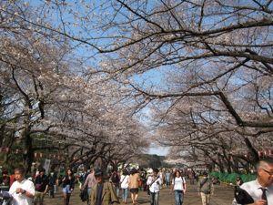 上野散策:春の芸術鑑賞_d0010432_1391171.jpg