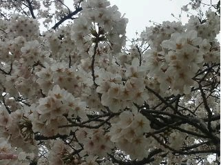 今日の舞鶴公園_e0149436_2085386.jpg