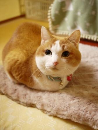 猫のお友だち ふくちゃん編。_a0143140_16523485.jpg