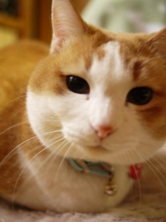 猫のお友だち ふくちゃん編。_a0143140_16532290.jpg