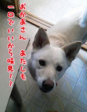 f0195543_01157.jpg