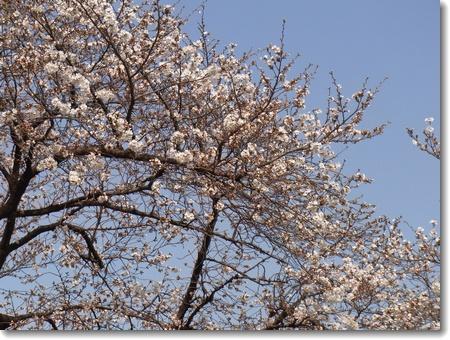 春分の日_c0147448_18201618.jpg