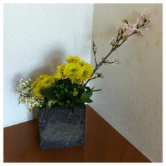 mini 春 _c0160161_23261935.jpg