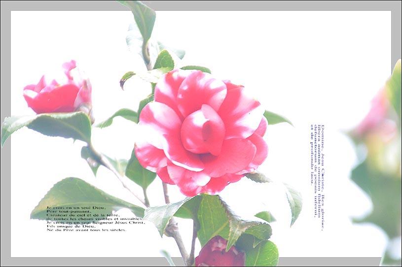 f0198771_094636.jpg