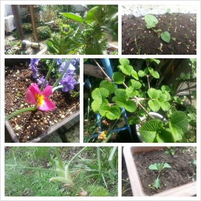 庭に出たら_d0087572_1143442.jpg