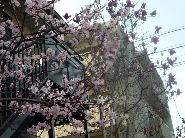 ほらほらこっちにも春がやってきたよ・・・。_c0086176_8395056.jpg