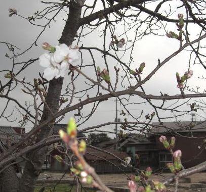 変わりゆく春_b0231886_15214637.jpg