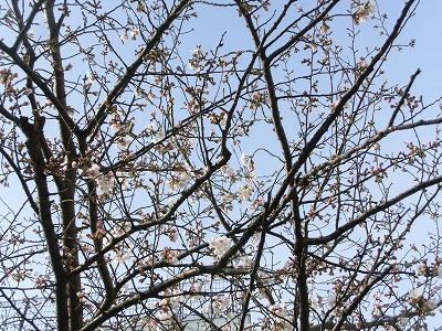 春分の日・・春っていうより初夏_e0222588_16474448.jpg