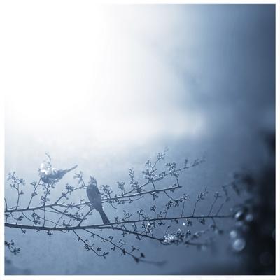 spring!_b0060102_11374237.jpg