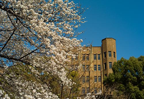 白金台の桜、満開はもうすぐですね!_b0194208_20281151.jpg