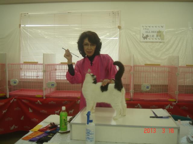 エキゾチックのアイバくん~AJC CAT SHOW_e0033609_13552179.jpg