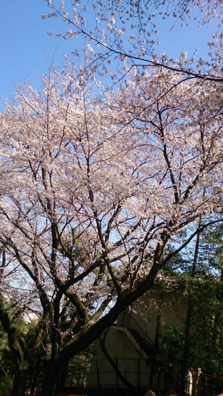 春ということで_d0134311_13193726.jpg