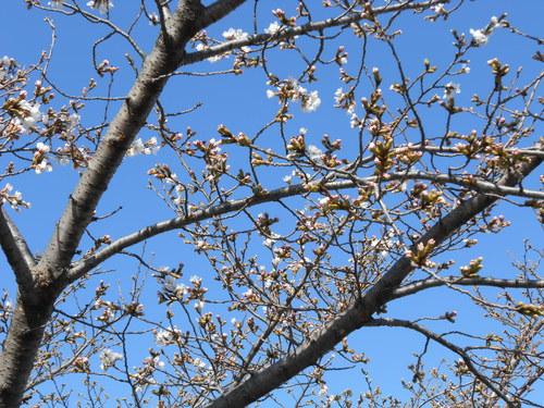 春がキタ~_c0266012_14311026.jpg