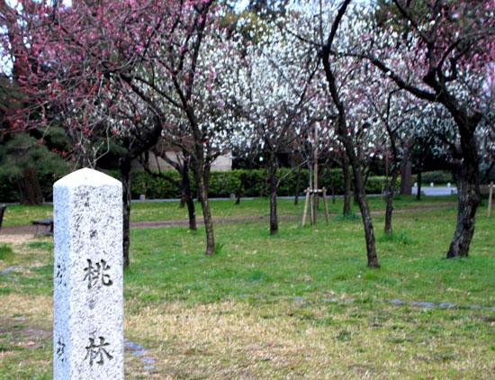 京都御苑1 桜・桃・梅そろい咲き_e0048413_19195445.jpg
