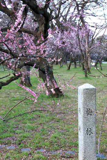 京都御苑1 桜・桃・梅そろい咲き_e0048413_19202788.jpg