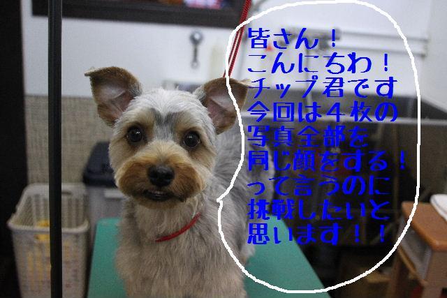 b0130018_01118.jpg