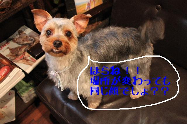 b0130018_0175.jpg