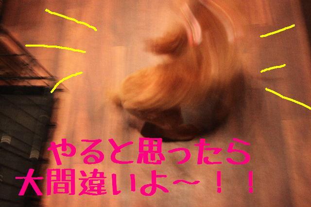 b0130018_07766.jpg