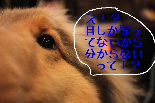 b0130018_23554036.jpg