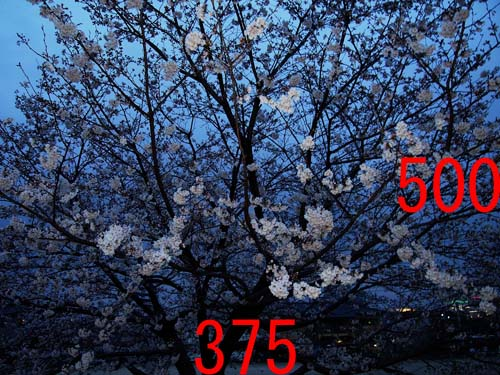 d0032222_1952796.jpg