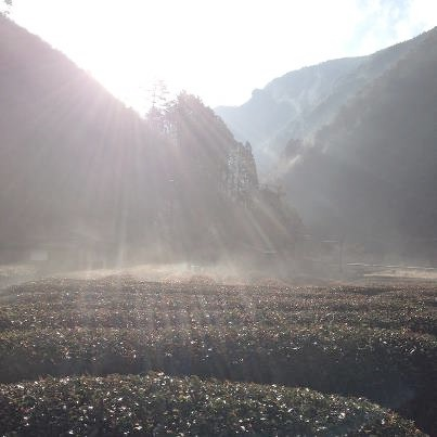 「山霧の香り」と落雁_a0169924_21395912.jpg