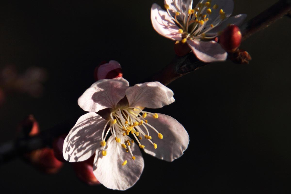 茨城県水戸市 「偕楽園」梅まつり_d0106628_15114418.jpg