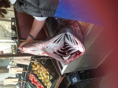 3mのサメ バゥ_d0084229_17402749.jpg