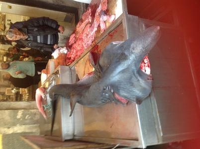 3mのサメ バゥ_d0084229_1744165.jpg