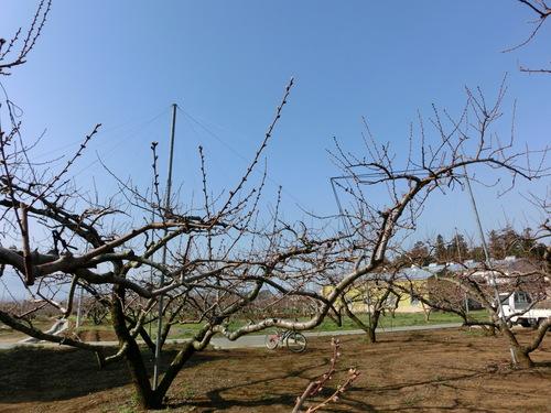 春の仕事が始まりました♪_a0263653_2142881.jpg