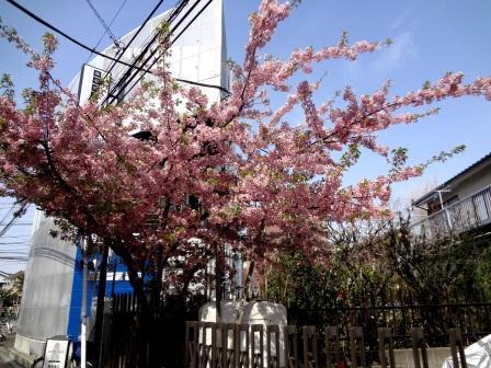 春ですね ♪_e0263559_011252.jpg