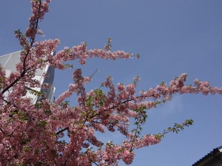 春ですね ♪_e0263559_013390.jpg