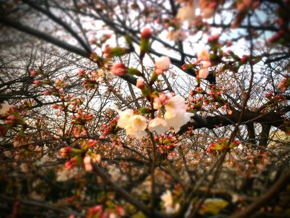春なんです。_b0199365_21164264.jpg